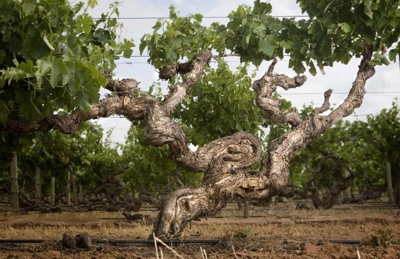 Barossa Old Vine